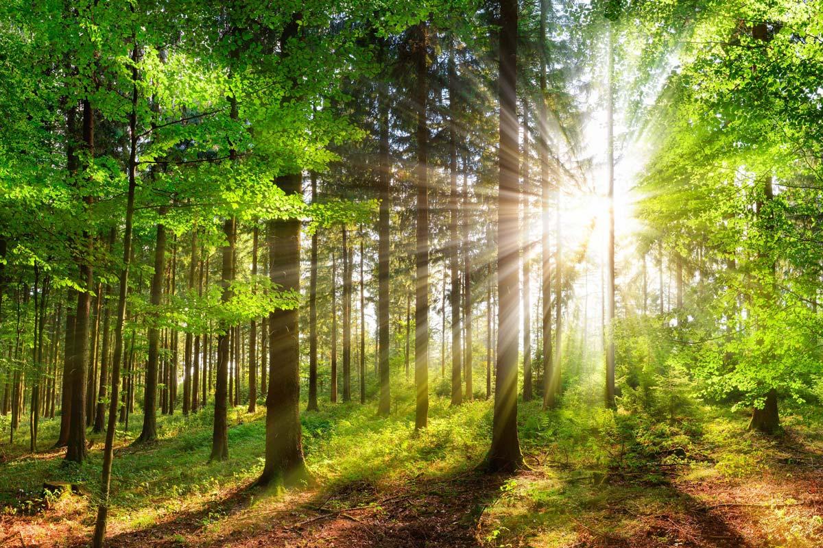 Umwelt und Natur
